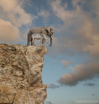 Elephant-Donkey-On-Cliff