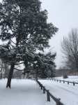Snowy park lane
